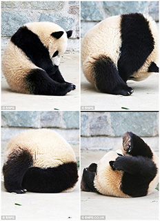 0000021-panda-who-did-a-roly-poly-in-his-sleep-01-320