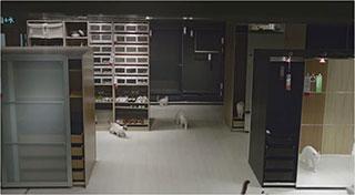0000219-ikea-100-cats-01-320