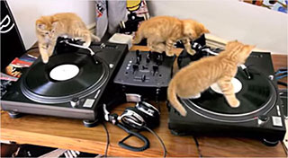 0000440-kittens-on-dj-decks-01-320