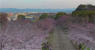 00006628-japan-cherry-blossoms-02-320